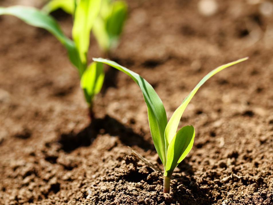 soil set